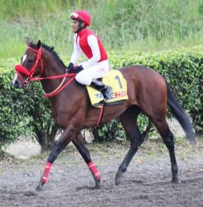 the Ecuadorian horse of businessman Alvaro Noboa, who has a record as the top winner