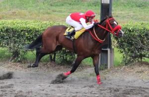 caballomimo-alvaronoboa