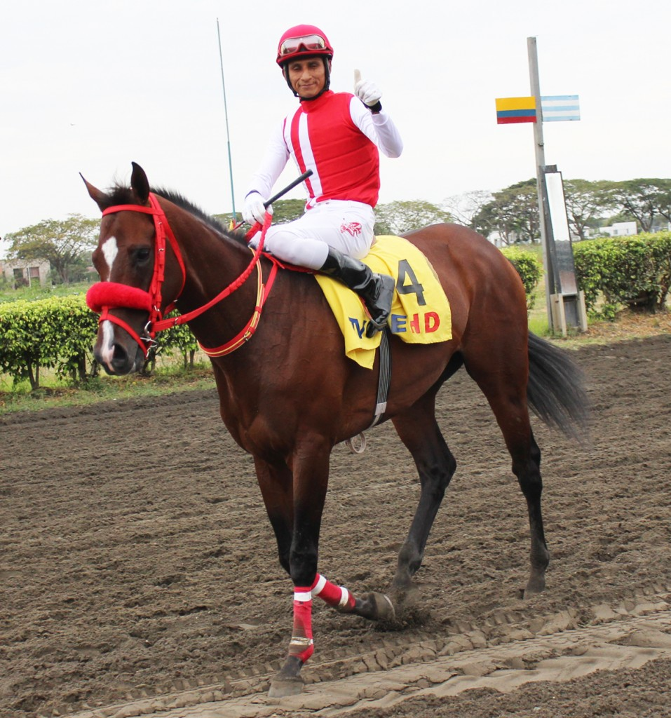 Mimo, the national champion horse, giving success to his owner Alvaro Noboa